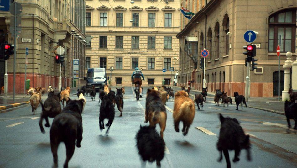 """Sozialfabel """"Underdog"""": In Ungarn rasen die Hunde"""