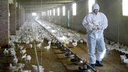 Erstmals Menschen mit Vogelgrippevirus vom Typ H5N8 infiziert