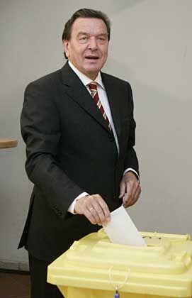 Schröder bei der Stimmabgabe: Zu Fuß zum Wahllokal