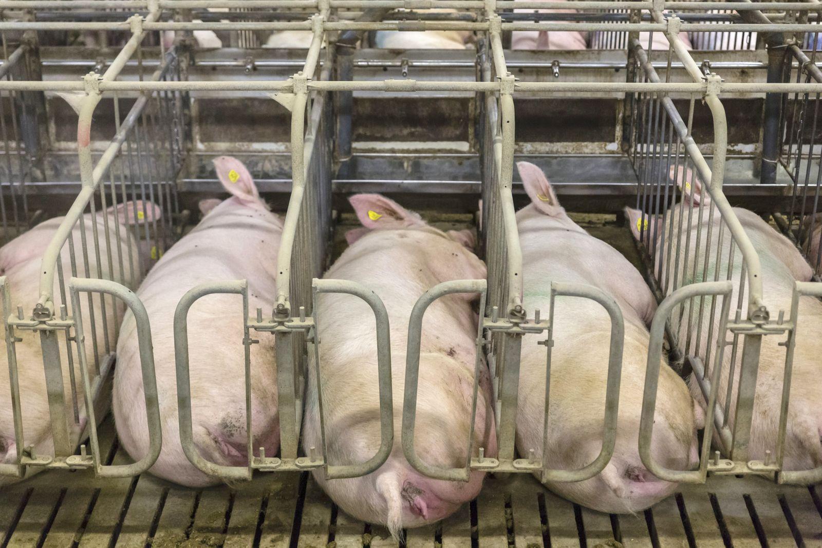 Tierschützer wollen größere Käfige einklagen