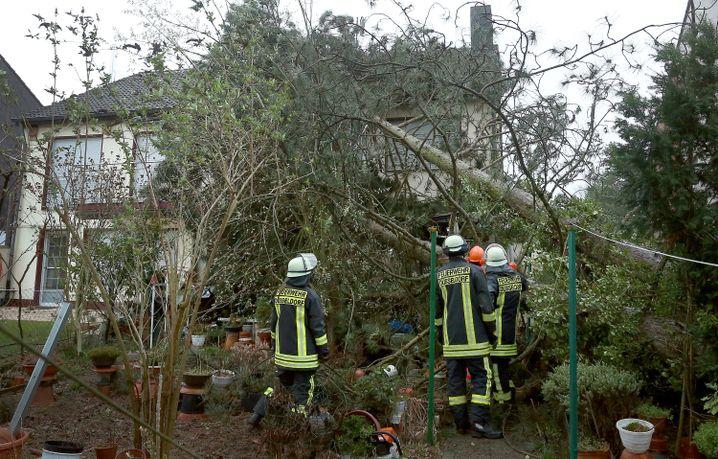Umgestürzter Baum in Düsseldorf