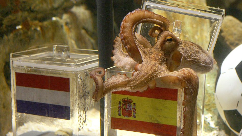 Paul the Psychic Octopus predicts Spain as the winner of the 2010 World Cup final -- correctly, as it turned out.