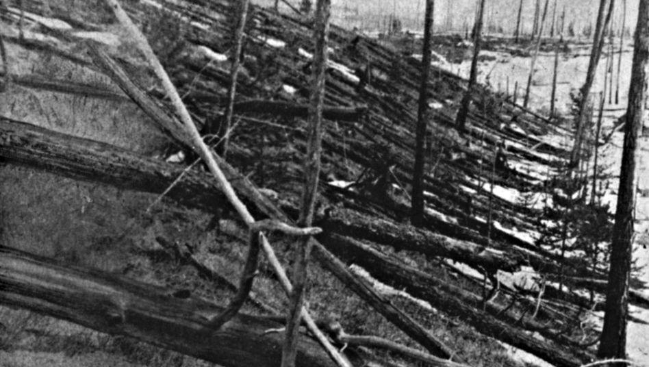 Umgeknickte Bäume in Ostsibirien: Was löste das Tunguska-Ereignis aus?