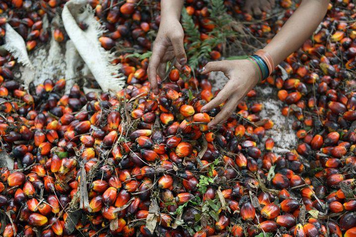 A worker handles palm oil seeds.