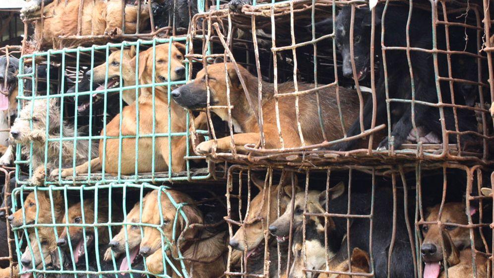Thailand: Die grausamen Methoden der Hundefleisch-Mafia