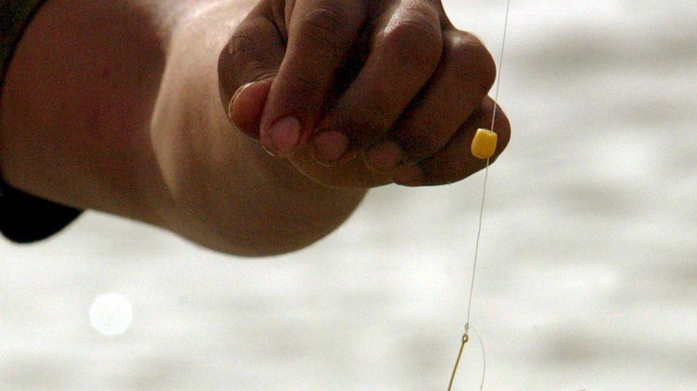 Fische: Neuronengeflüster im Endhirn