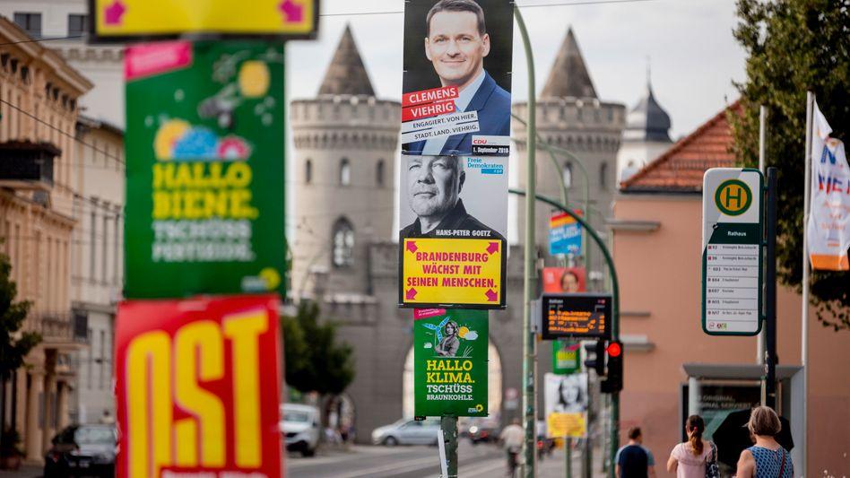 """Wahlkampfplakate in Brandenburg (in Potsdam): """"Der Zuspruch ist deutlich gewachsen"""""""