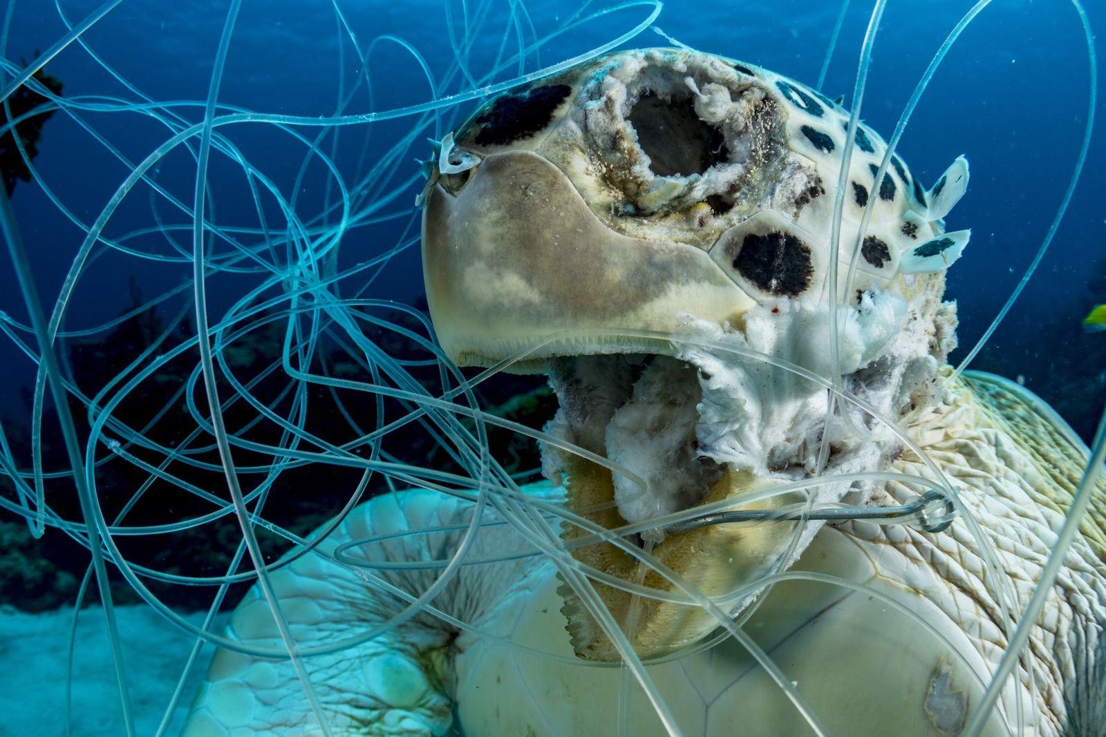 Underwater Conservation1_Shane_Gross_Victim