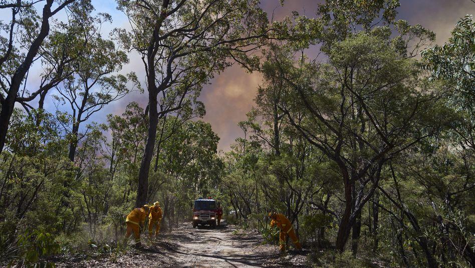 Feuerwehrleute nahe Sydney: Noch ein Mensch wurde Opfer der Flammen