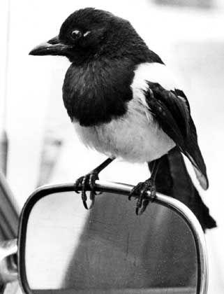 """Elster: Die Finanzbehörden haben den """"Vogel"""" bisher nur für Windows programmiert"""