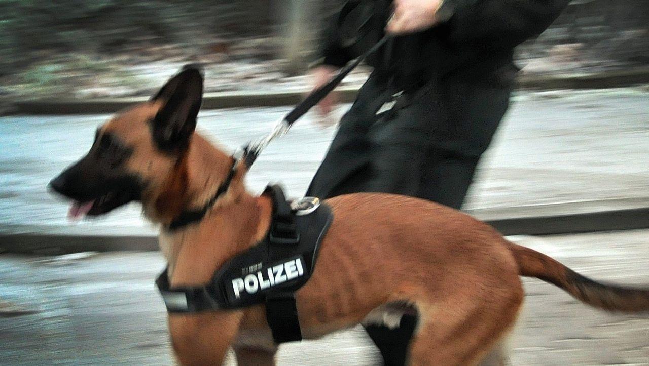 Können Hunde wirklich Verbrechen aufklären?