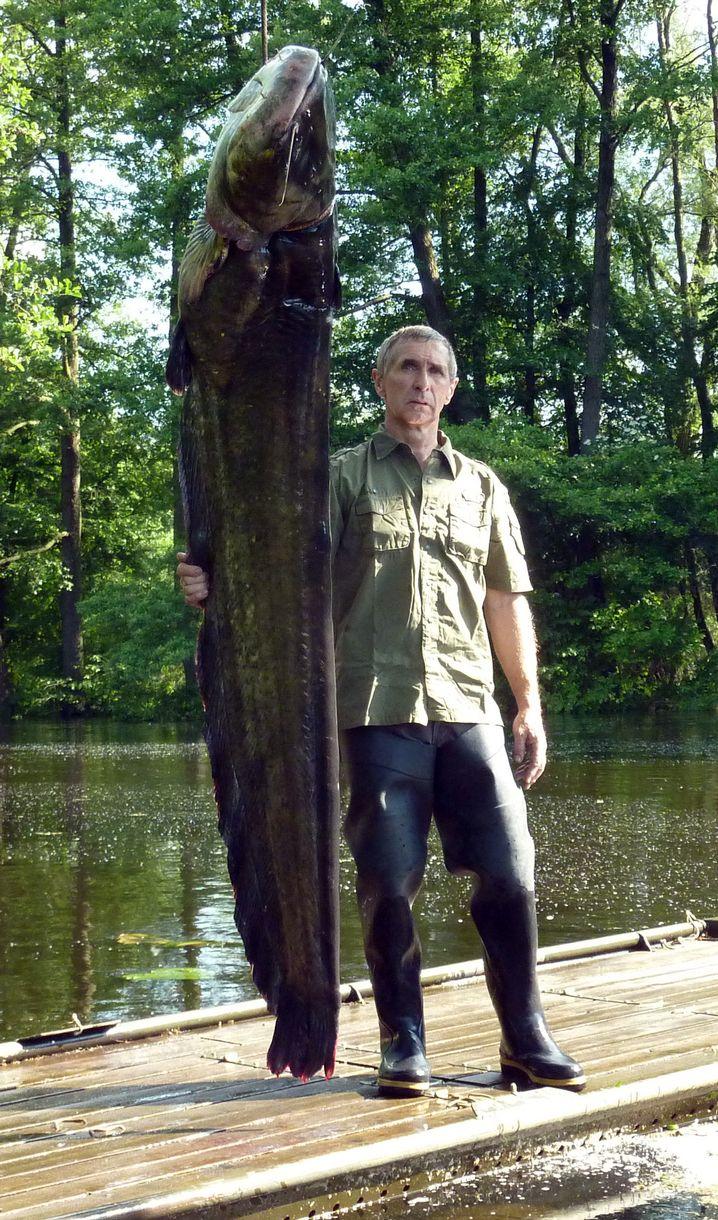 Spreewaldfischer Wolfgang Richter und sein Wels