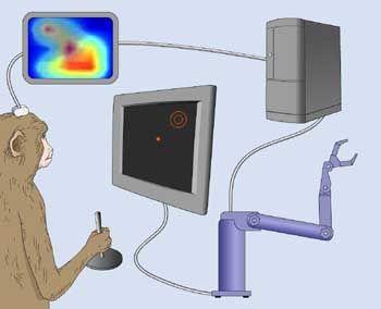 Klicken Sie auf die Illustration, um ein Flash des Affen-Experiments zu betrachten