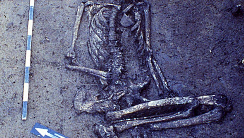 Skelett aus Grab der schnurkeramischen Kultur in Lauda-Königshofen, Baden-Württemberg