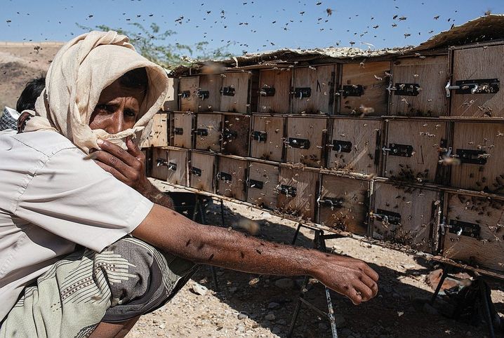 A beekeeper near Ataq: Against a swarm of bees, even the guy with the machine gun doesn't stand a chance.