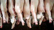 Ufa plant Serie über Corona-Ausbruch in Fleischfabrik