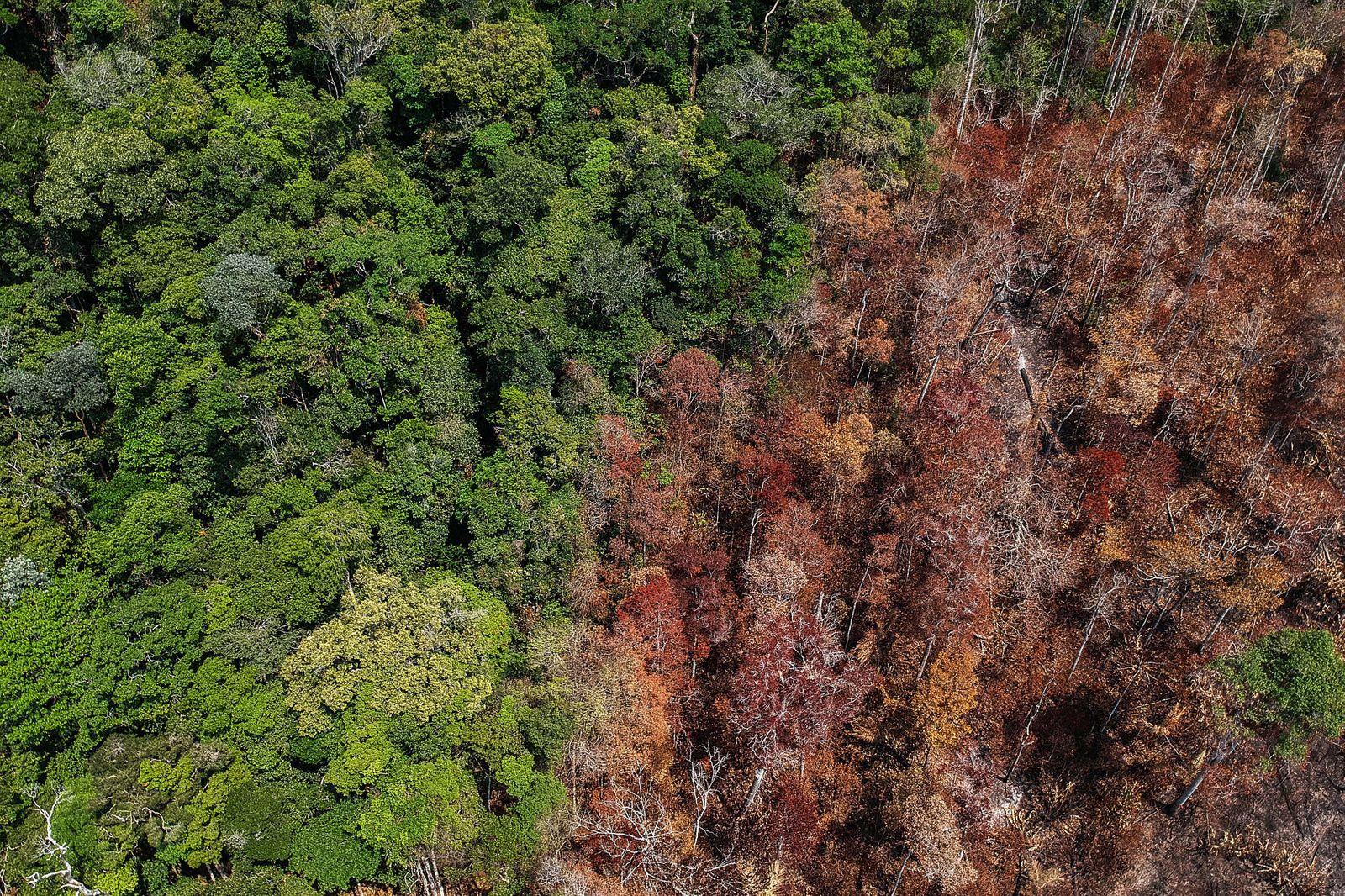 BRAZIL-TRANS-AMAZONIAN-HIGHWAY