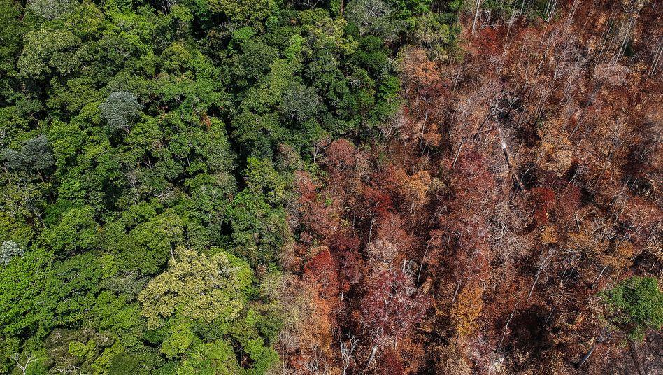 Brasilianisches Waldgebiet mit Brandschäden im Bundesstaat Pará