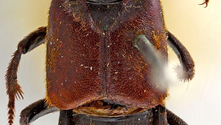 Darwinilus sedarisi: Nach 180 Jahren nicht mehr namenlos
