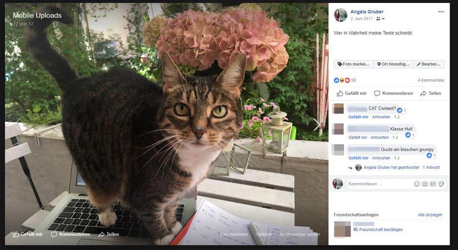 Cat-Content funktioniert: Grubers Beitrag mit den meisten Likes im Jahr 2017