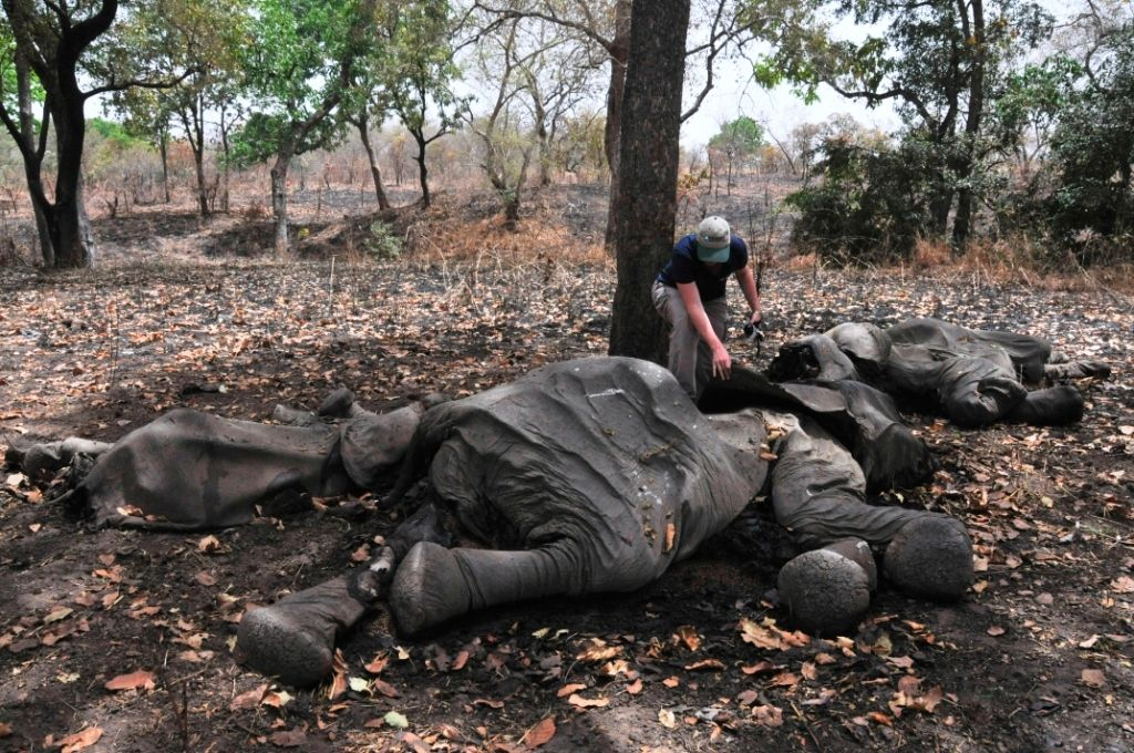 Elfenbeinjäger Kamerun