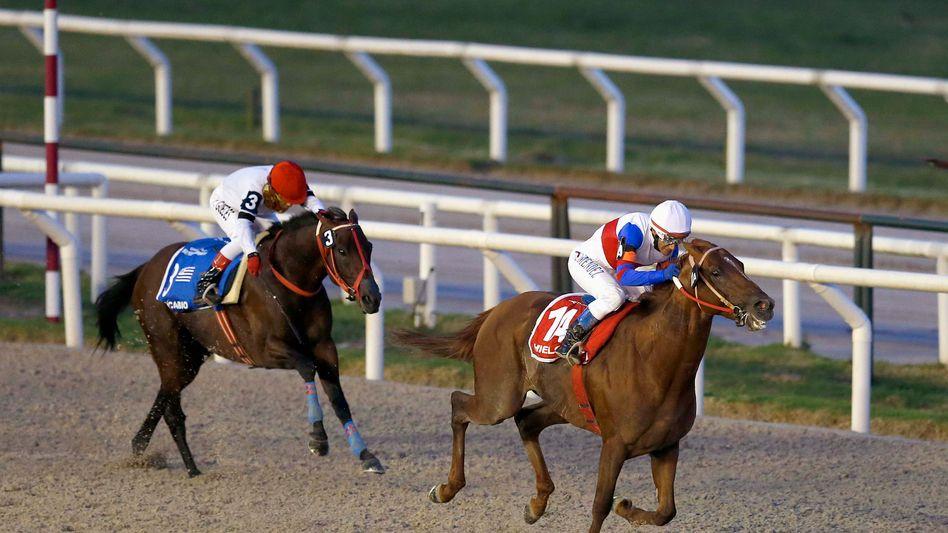 Pferderennen in Montevideo (Januar 2015): Der erste hat verloren