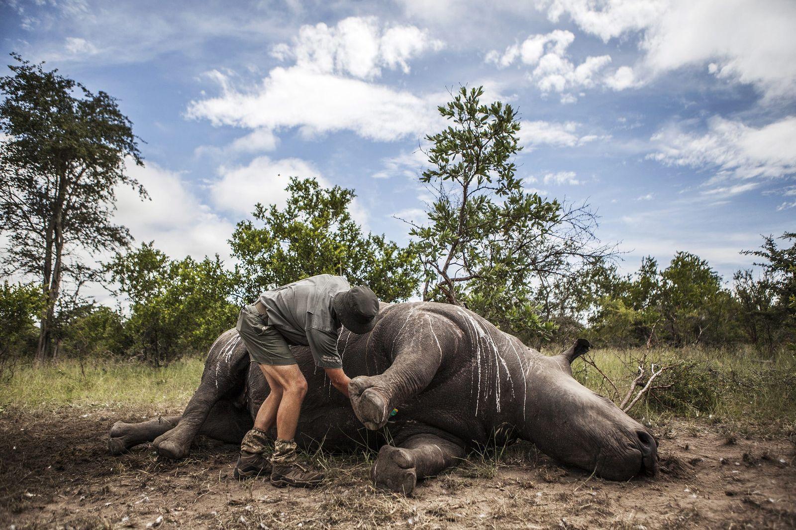 Südafrika/ Wilderei/ Nashorn