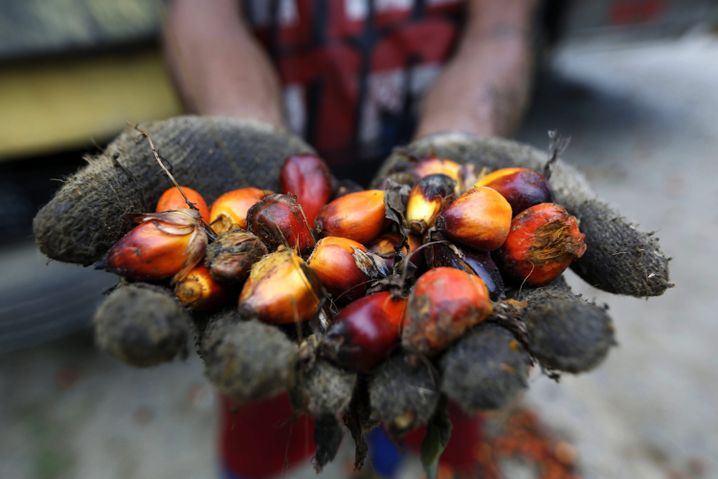 Palmöl wird aus den Früchten der tropischen Ölpalme gewonnen
