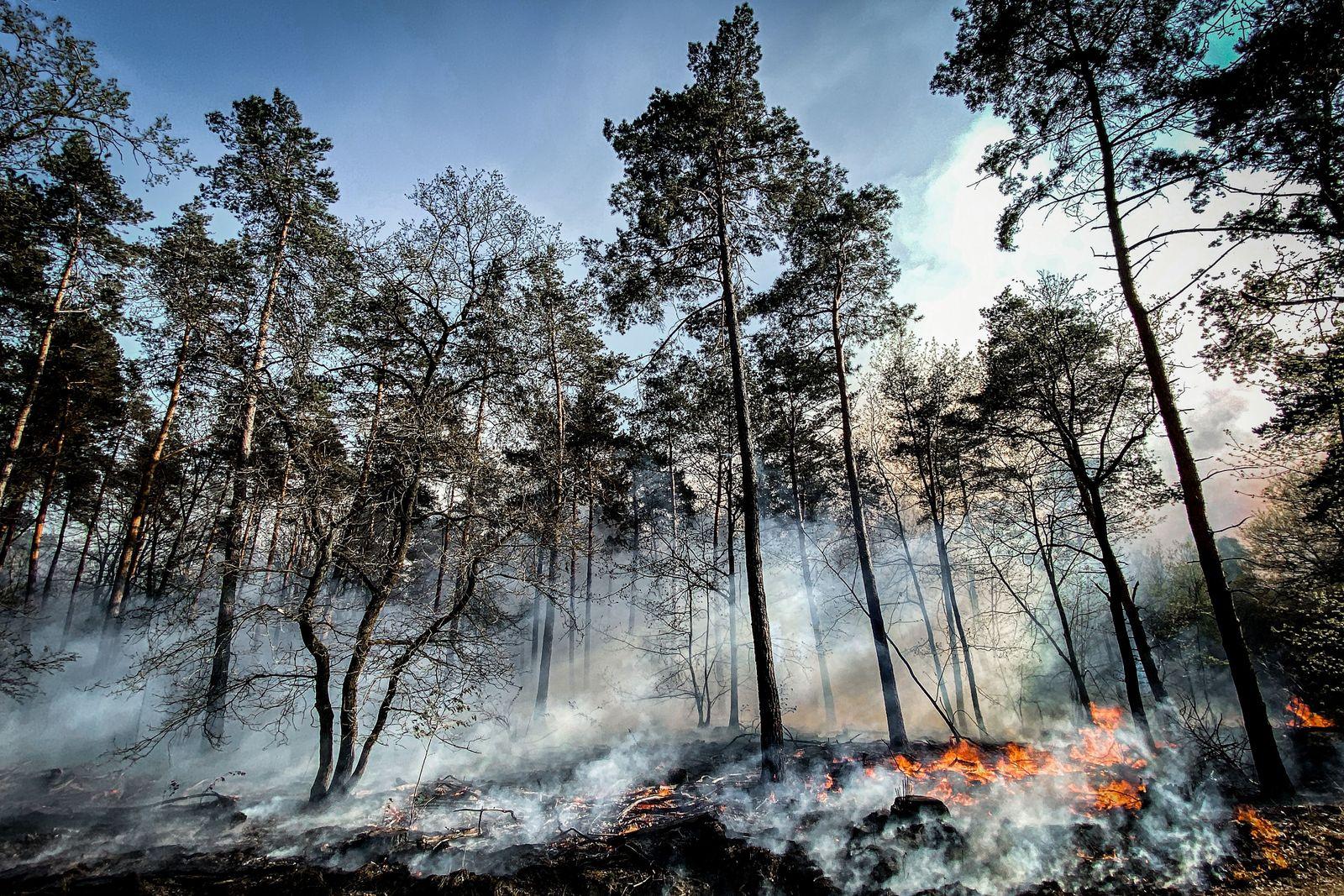 Forest fire in the German-Dutch Border Area, Niederkruechten, Germany - 21 Apr 2020