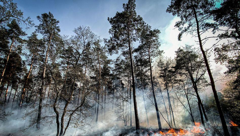 Feuer und Rauch im Nationalpark De Meinweg an der niederländisch-deutschen Grenze