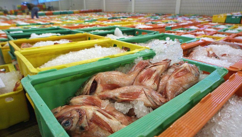 Fisch in der Auktionshalle (in Bremerhaven, 2002): Verbraucher sind verunsichert