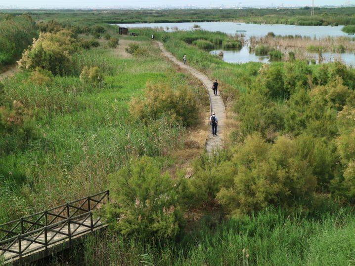 Teil des Naturschutzgebietes Albufera de Valencia in Spanien