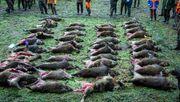 Jäger in Deutschland erlegen so vieleWildschweinewie noch nie