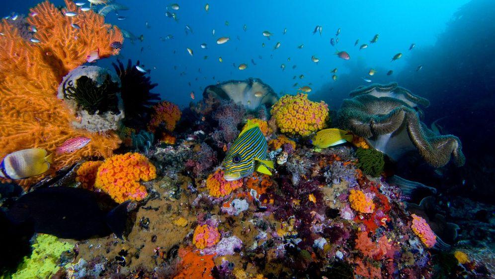 Sensible Meeresbewohner: Vergängliche Schönheit