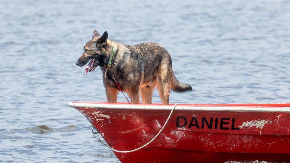 Einfelder See bei Neumünster: Spürhund Thor sucht nach der vermissten 13-Jährigen
