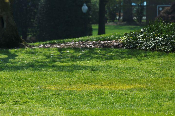Ein gelber Fleck zeigt, wo die Eiche stand