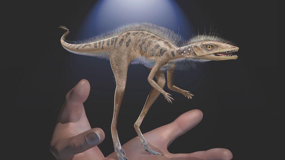 Neu beschriebenes Reptil namens Kongonaphon kely (künstlerische Darstellung)