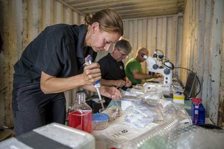 Forscher suchen in den Proben nach Eizellen