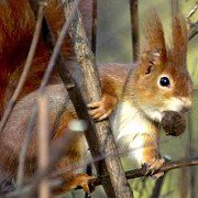 Most squirrels are harmless little creatures. But one aggressive squirrel went on the rampage on Tuesday injuring three.