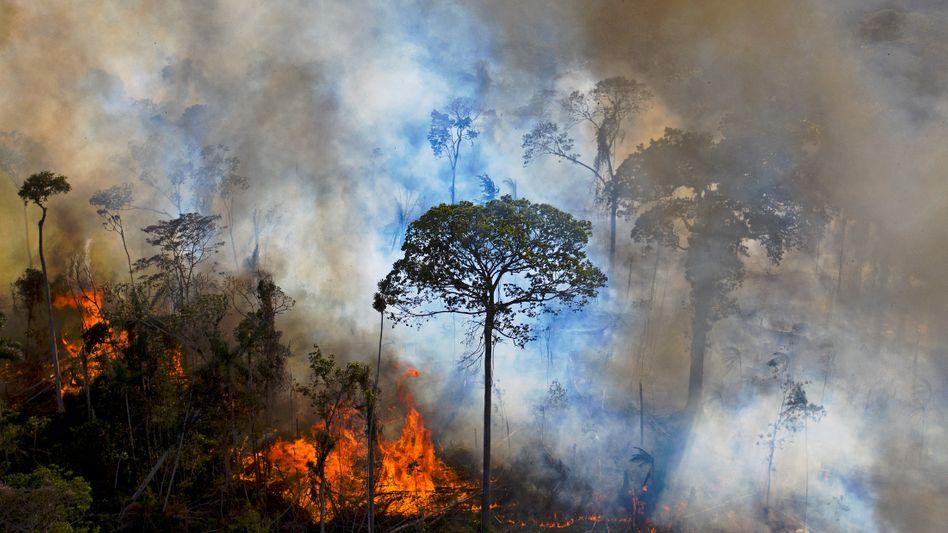 Illegale Rodung von Regenwald in Brasilien im Sommer 2020
