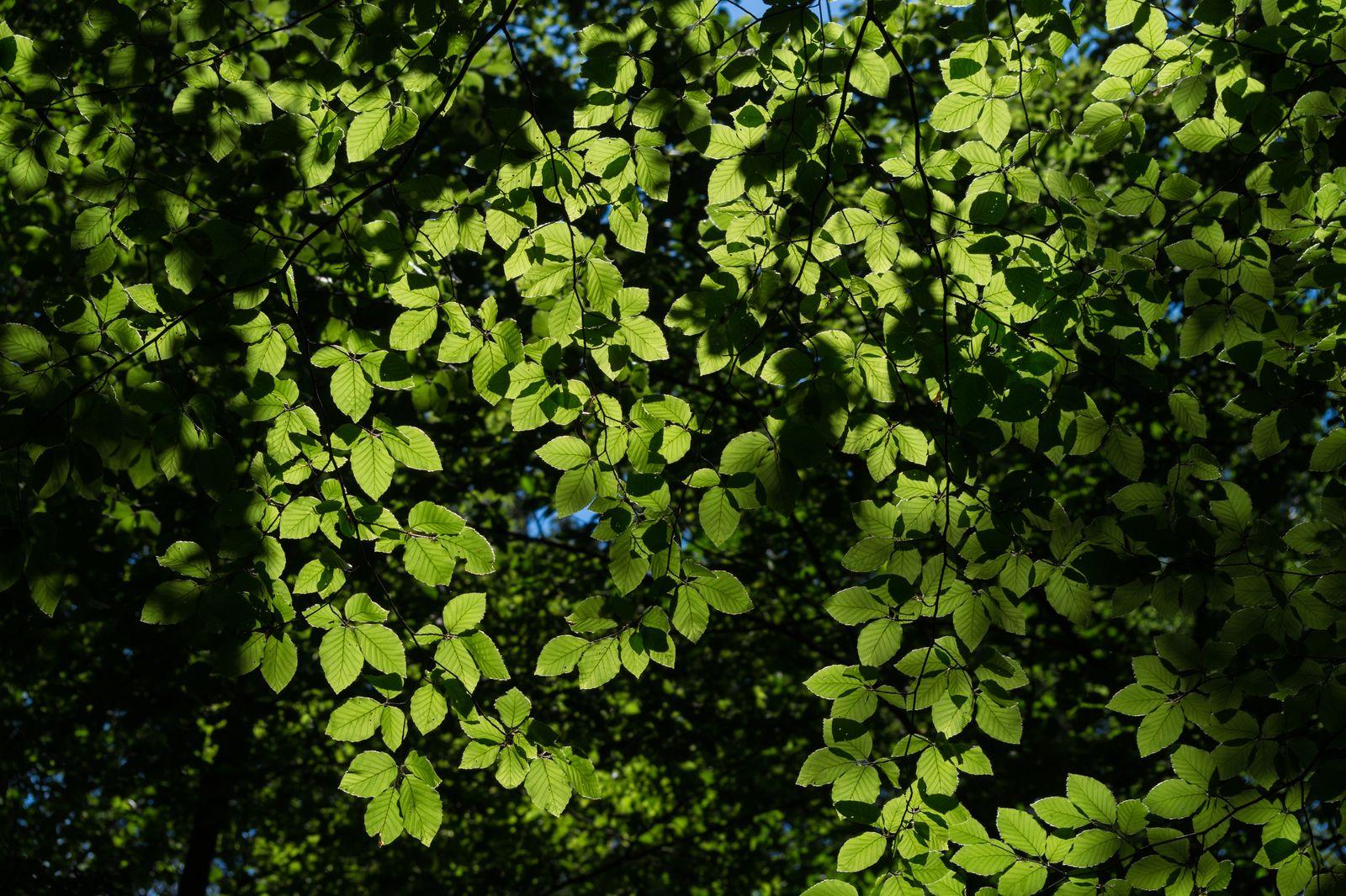 Full Frame Image Of Leaves On Tree