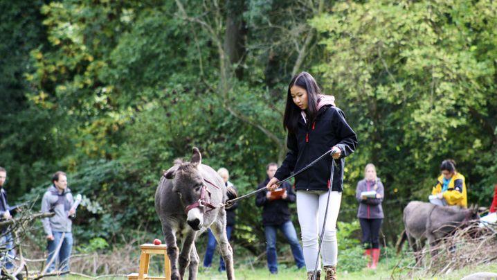 Tiere als Karrierehilfe: Esel im Führungsseminar