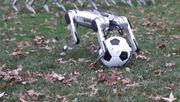 Fußballspiel der Hunde-Roboter