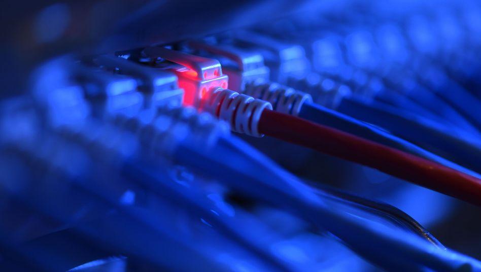 Netzwerkkabel an einem Server: Zigtausende Datenbanken unzureichend gesichert