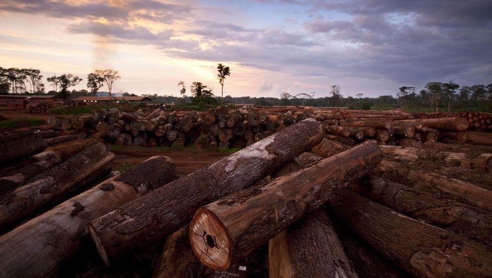 Abholzung: Wie der Wald verschwindet