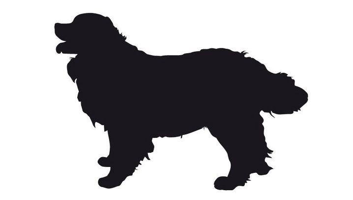 Fehlzüchtungen bei Hunden: Gebrechliche Begleiter
