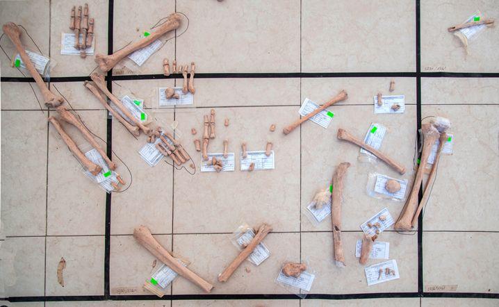 Platzierung der Knochen zur Rekonstruktion des Fundorts