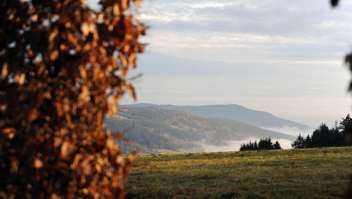 Herbstspaziergänge: Alles ist erleuchtet