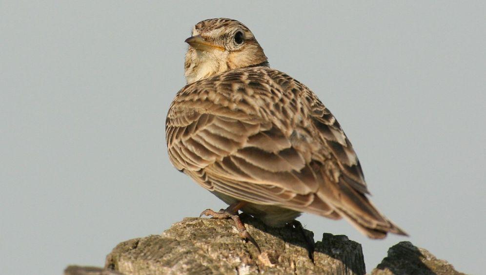 Malta stimmt für Vogeljagd: Tod auf der Durchreise