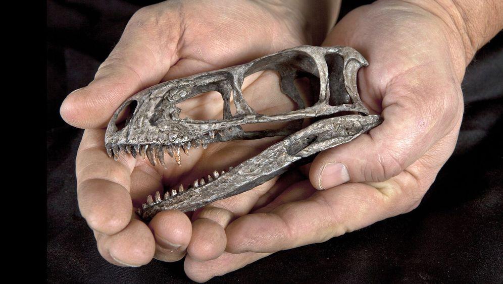 Eodromaeus murphi: Zierlicher Urahn der Raubsaurier